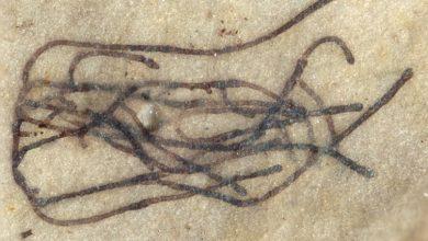 Photo of Виявлений найдавніший родич всіх рослин і дерев