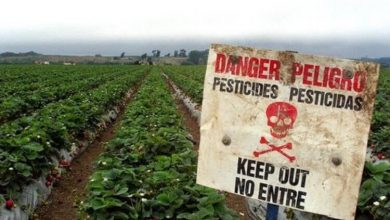 Photo of Пестициди викликають ненормальний ріст мозку у бджіл