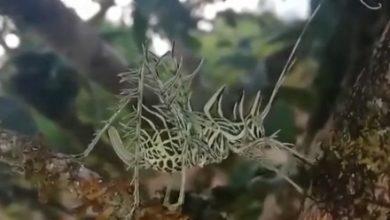Photo of Дивну істоту знайшли в Коста-Ріці