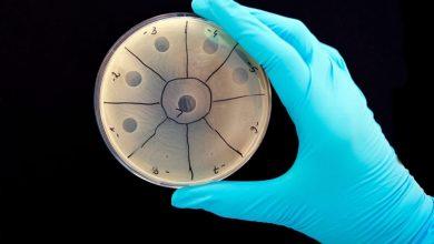 Photo of Вчені хочуть замінити антибіотики програмованими вірусами