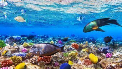 Photo of Океани можуть відновитися до 2050 року