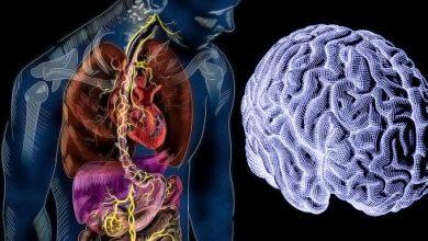 Photo of З'ясовано, як кишечник пов'язаний з мозком