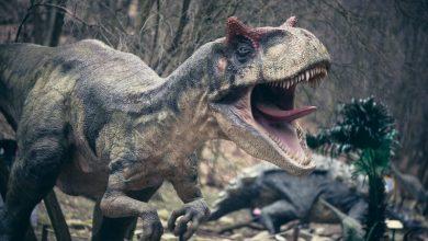 Photo of Динозаври займалися канібалізмом, щоб вижити