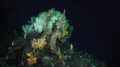 Photo of Дослідження: в глибинних шарах океану вода гріється в 11 разів швидше, ніж раніше