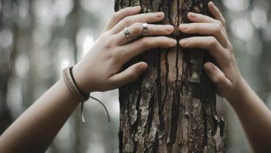 Photo of Кільця дерев можуть пояснити багато фактів історії