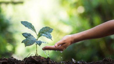 Photo of Висадка нових дерев може не врятувати клімат, а тільки нашкодить йому