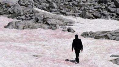 Photo of Рожевий лід у Альпах назвали маркером точки неповернення у процесі глобального потепління