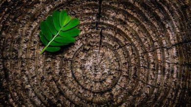 Photo of Кільця дерев вказали на кліматичну аномалію в 20 столітті