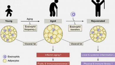Photo of Відкрита ключова причина старіння