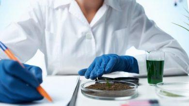 Photo of Вчені з США вважають, що заміна тваринних білків рослинними продовжує життя