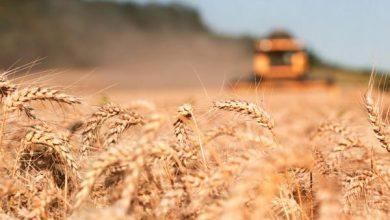 Photo of Вертикальні ферми підвищать врожайність пшениці в 600 разів