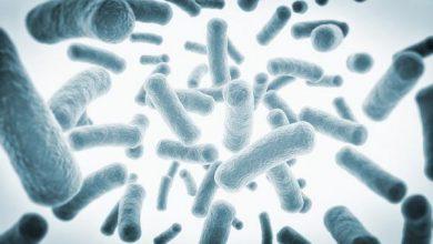 Photo of У бактерій виявлений механізм співпраці