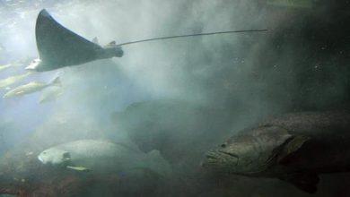 Photo of Занадто теплі води змушують риб мігрувати на північ