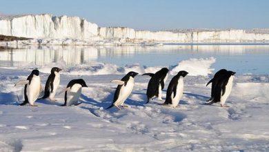 Photo of Антарктиді передрекли зникнення пінгвінів
