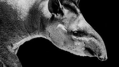 Photo of Колонізація Америки спустошила її тваринний світ