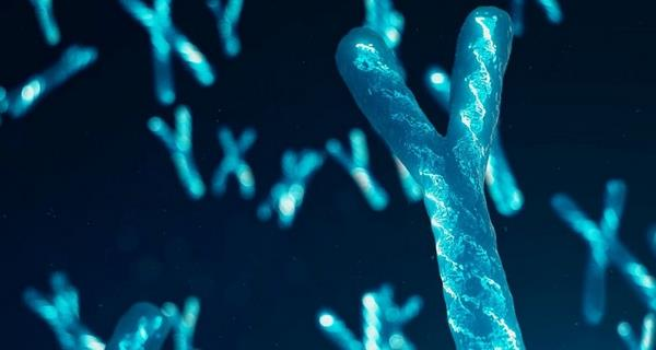Чоловіча Y-хромосома виявилася не така проста, як про неї думали раніше