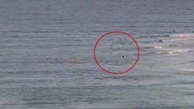 Photo of Велика біла акула вбила серфера в Квінсленді, Австралія