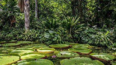 Photo of Підраховано наскільки Латинська Америка багатша біорізноманіттям від Африки