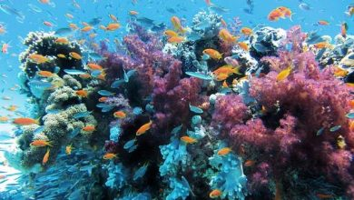 Photo of Забруднення води зруйнувало імунну систему коралів