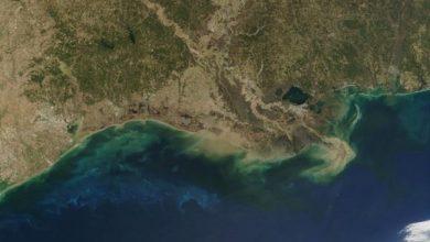 Photo of Дослідники вперше відстежили переміщення поживних речовин у водному середовищі