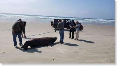 Photo of 137 морських левів загадково загинули в Мексиці