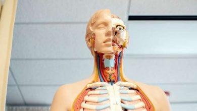 Photo of Скільки всього органів в людському тілі — відповідь вчених