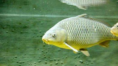 Photo of Чи може луска риби поліпшити аеродинаміку літаків — відповідь вчених