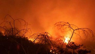 Photo of Південна Америка розорена безпрецедентною посухою і пожежами. Загинули тисячі видів