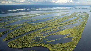 Photo of Ліси Амазонки можуть пережити глобальне потепління, але є одна умова