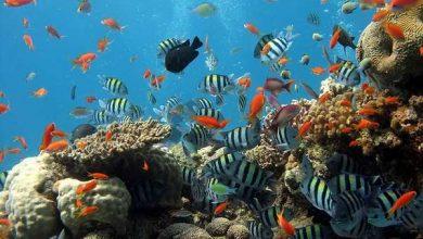 Photo of Екосистеми здатні протистояти змінам навколишнього середовища, але лише до певної межі