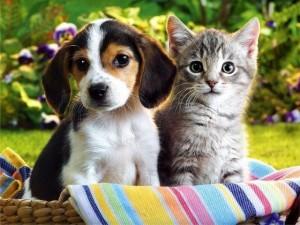 собака та кіт
