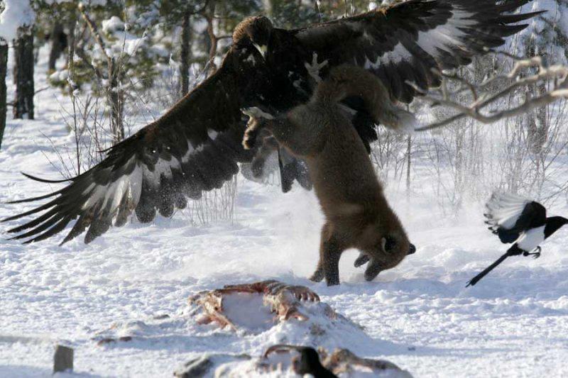 Битва звірів