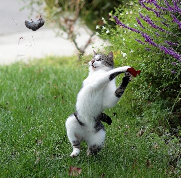 Котиська створіння непердбачуванні