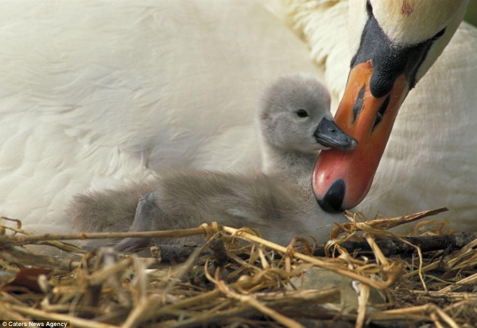Материнська любов (6)