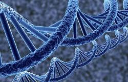 Голодний ген