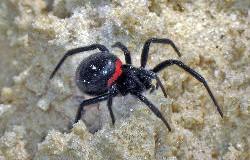 Павуки мають риси характеру