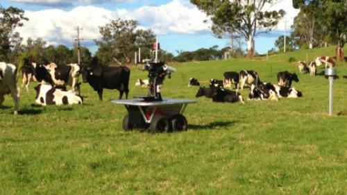 Робот-ровер може позбавити пастухів роботи