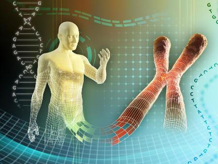 Чоловіча хромосома не так вже потрібна для запліднення?