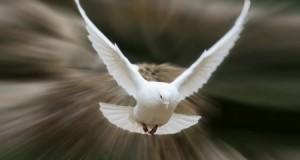 Хімія і вітер: як голуби знаходять шлях додому?