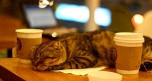 Європа переживає бум на котячі кафе