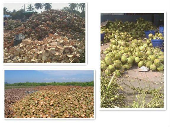 Електроенергія з кокосових відходів