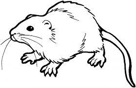 Відлякувач щурів «Торнадо». Сучасний метод боротьби з гризунами