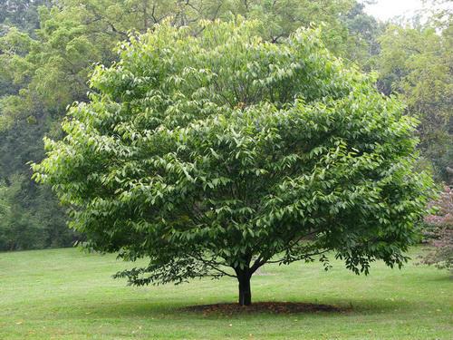 Дерева абсорбують 65% бруду з повітря - вчені