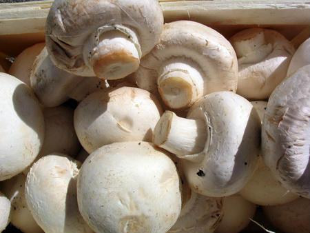Знайдено гриби, що захищають організм від раку