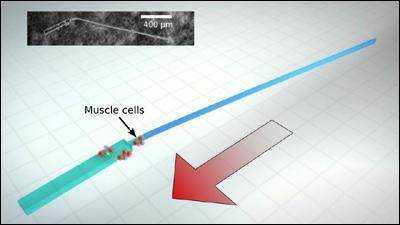 Вчені створили крихітного ґібридного біомеханічного робота, оснащеного жгутиком і здатного плавати навіть у густій рідині.