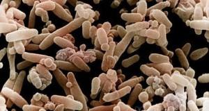 Мікроби стали нашою другою суттю