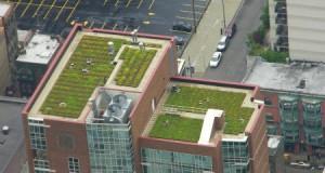 Чорний, білий або зелений- екологія дахів