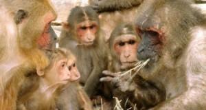 Банкіри можуть навчитися уникати криз у мавп