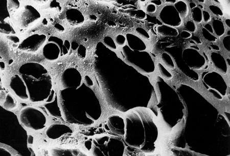 nanomotory_450
