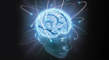 brain_450